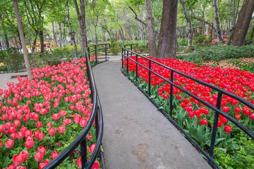 عکس های باغ ایرانی در فصل بهار